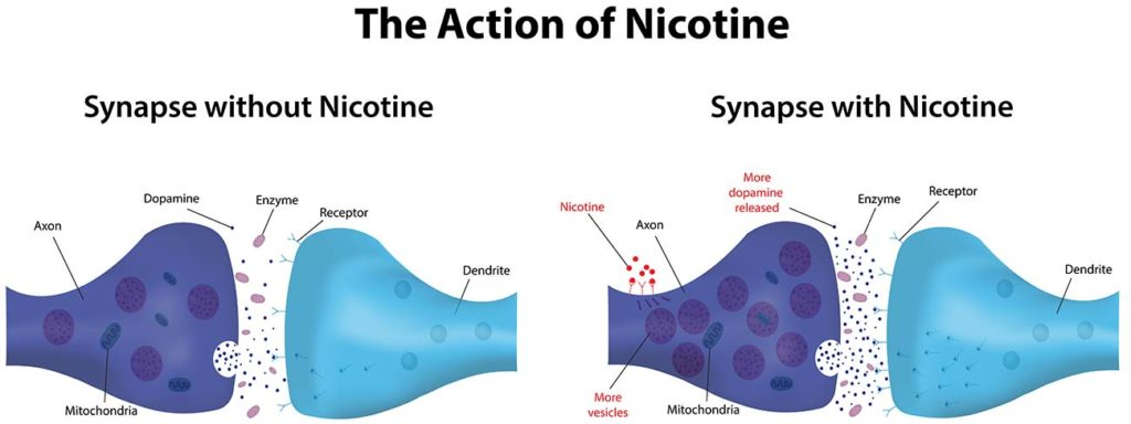 nicotine and dopamine